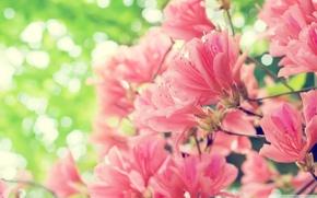 Picture flowers, bokeh, spring, bloom