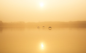 Picture birds, fog, lake