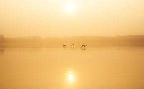 Picture birds, fog, lake