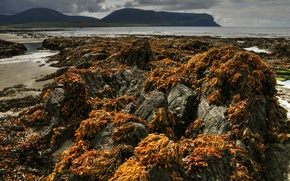 Picture sea, the sky, algae, mountains, clouds, stones, rocks