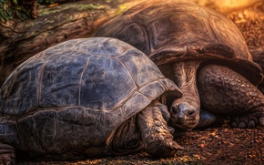 Picture nature, background, turtles