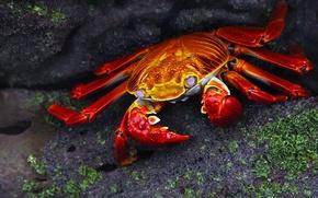 Picture stones, crab, beautiful