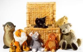 Picture basket, toys, kitty, black kitten
