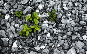 Wallpaper fight, survival, leaves, stones, plant