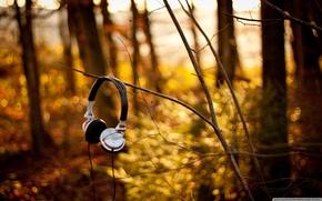 Picture autumn, forest, nature, headphones
