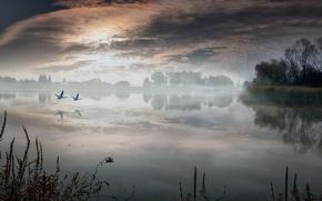 Picture landscape, lake, morning, village, swans