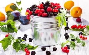 Picture berries, raspberry, fruit, plum, currants, BlackBerry, apricots, fruits, berries, bucket