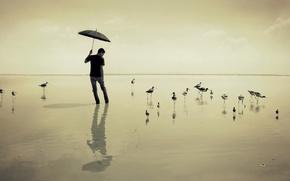 Picture sea, birds, umbrella, guy
