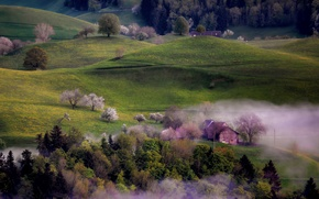 Picture trees, fog, hills, home, spring