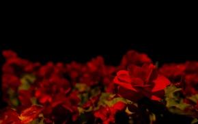 Picture Dark, Darkness, Flower, Flowers, Night