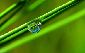 Picture grass, green, reflection, drop