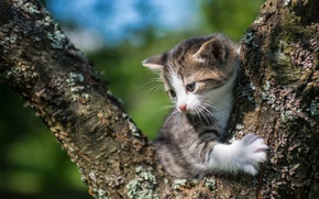 Picture baby, kitty, on the tree