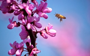 Picture macro, flowers, bee, branch, spring