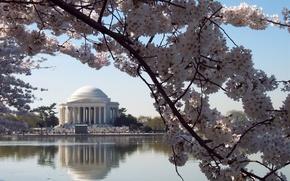 Picture flowers, Washington, USA, cherry, USA. Washington DC, Jefferson Memorial
