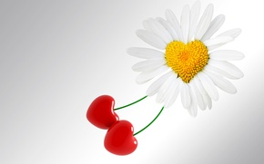 Picture flower, background, holiday, heart, Daisy, love, Valentine's day, heart, valentines day