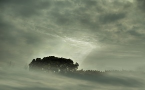 Wallpaper forest, landscapes, nature, fog, trees, fog, view, sky trees, forest