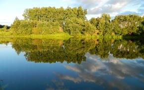 Picture summer, lake, birch, grove