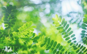 Picture leaves, macro, glare, blur, green, Twigs