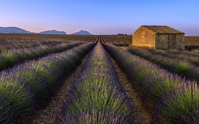 Picture field, house, lavender