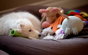 Picture dog, look, comfort, house, each, toys