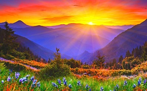 Picture the sun, sunset, flowers, mountains, dawn