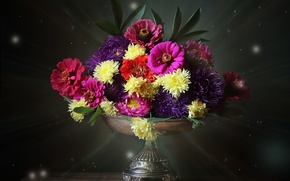 Picture composition, asters, zinnia