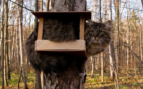 Picture cat, tree, feeder