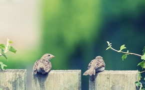 Picture animals, feathers, Wallpaper for desktop, two, wings, background, leaves, beak, HD wallpapers, Chica and the ...