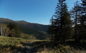 Picture road, forest, the sky, grass, hills, Sakhalin