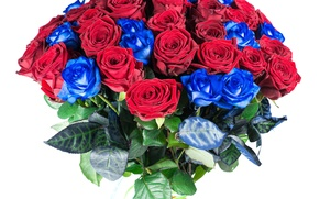Picture roses, bouquet, red, blue, Roses, Bouquets