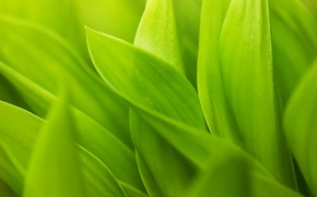 Wallpaper green leaves, greens, stems, sheets