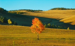 Picture field, autumn, the sky, landscape, tree, the wind, hills, birch