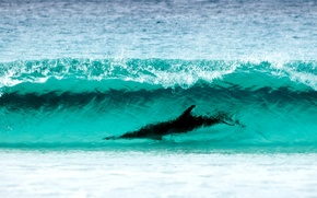 Picture sea, nature, water, shore, dolphin, Cape, Surfing, Le Grand NP, breathtaking sight, wave turquoise color