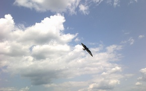 Picture the sky, freedom, bird