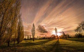 Picture the sky, grass, clouds, nature, lawn, poplar