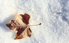Picture winter, frost, snow, sheet, leaf