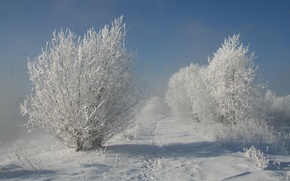 Picture winter, snow, trees, Nature