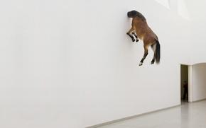 Wallpaper horse, Wallpaper, wall
