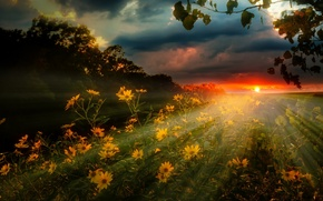 Wallpaper flowers, clouds, rays, nature, field, the sky, landscape, sunset