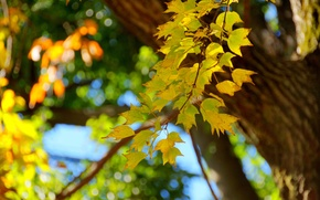 Picture autumn, leaves, macro, tree, branch, trunk