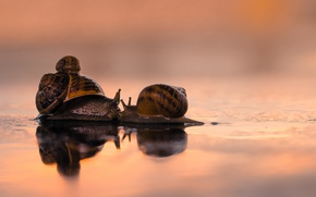 Picture love, kiss, family, snails