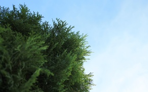 Picture the sky, Nature, cypress