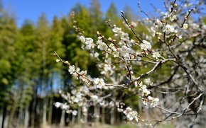 Picture flowers, tree, spring, Sunny, flowering