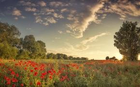 Picture field, summer, Maki