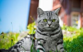 Picture cat, grass, cat, flowers, lies