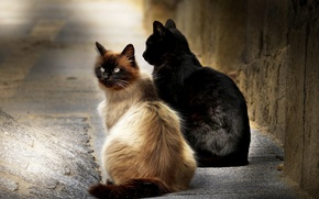 Picture cats, background, street