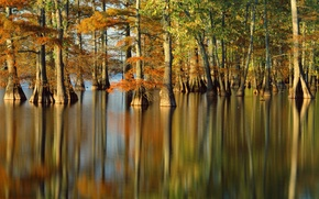 Picture autumn, water, trees, nature, river, photo