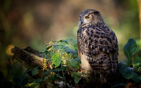 Picture leaves, owl, bird, log