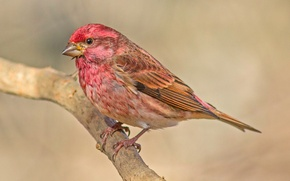 Picture bird, color, branch, feathers, beak