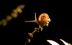 Wallpaper light, snail, plant